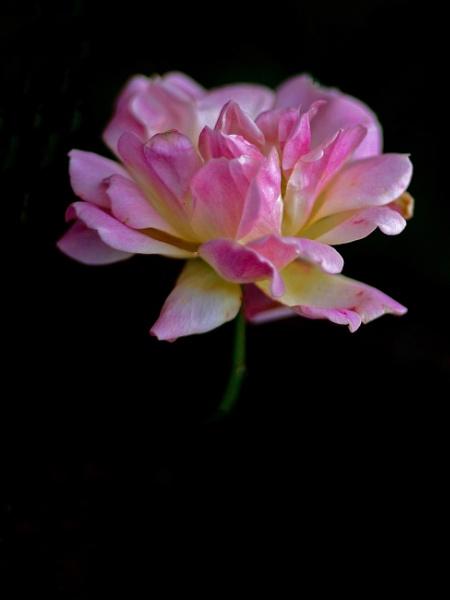 Sweet Dream......... by Mollycat