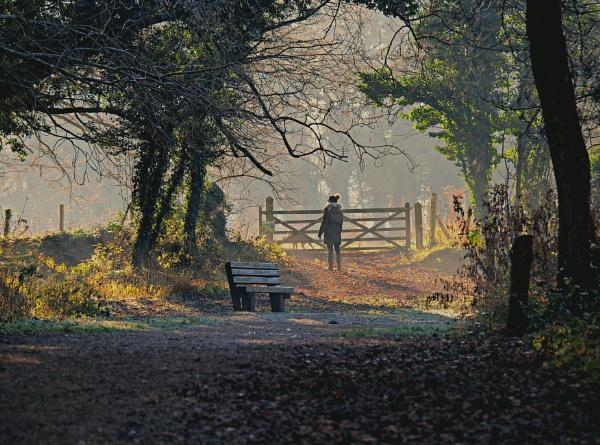 Misty morning. by brandish