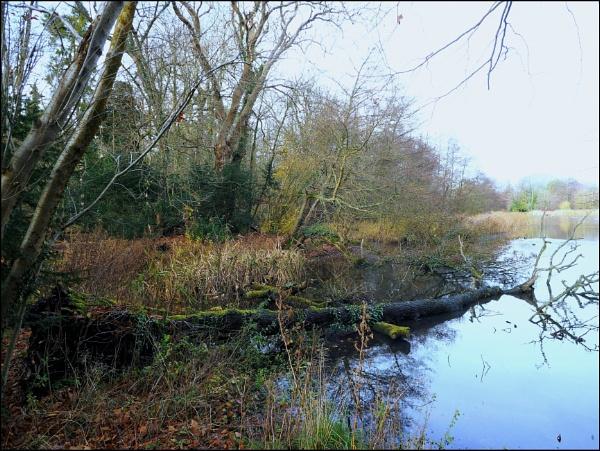 Scene from Stanton lake. by brandish