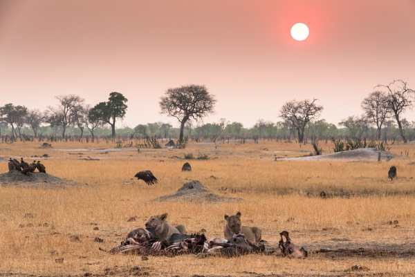 Sunrise and the lions by NathalieM