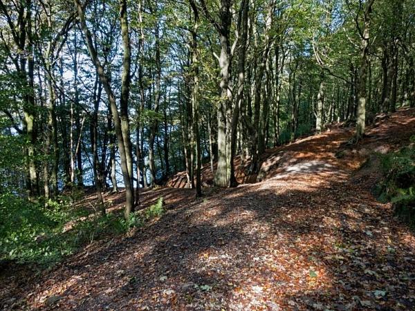 Roddlesworth Woods 409