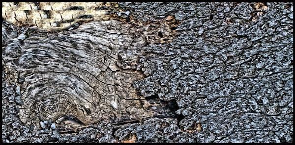 Wood Water by DonSchaeffer