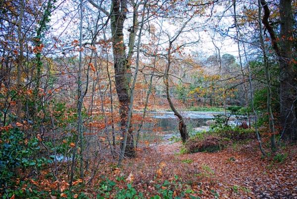 November wood by KrazyKA