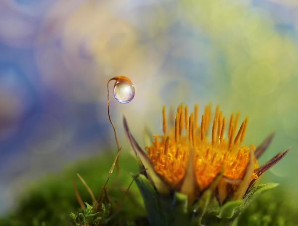 Happy daisy day