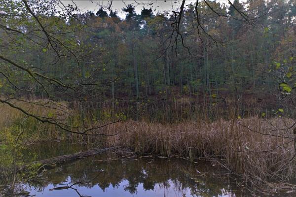 Autumnal Series - Hidden Lake at Dusk by PentaxBro