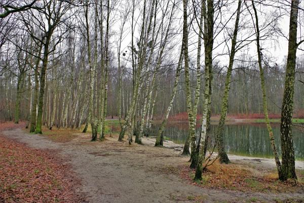 Autumnal Series - Birch Trees Pond by PentaxBro