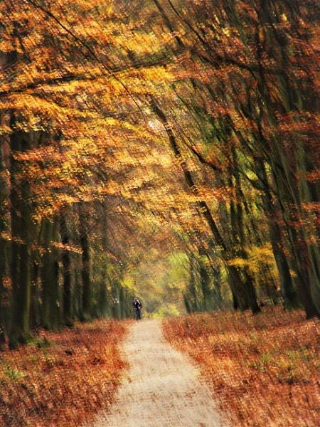 FOREST ART- Sleepwalking  by PentaxBro