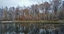 Autumnal Series - Birch Trees Pond Beach by PentaxBro