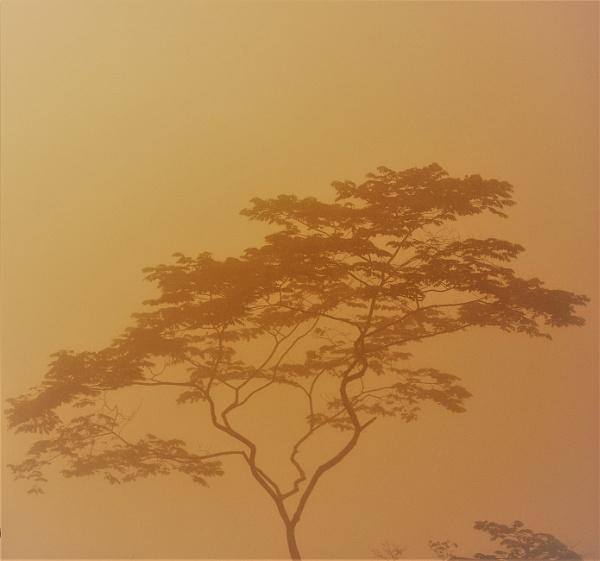 tree by DilipSarkar