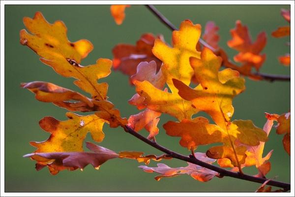 Goldener Herbst (Golden Autumn) by kw