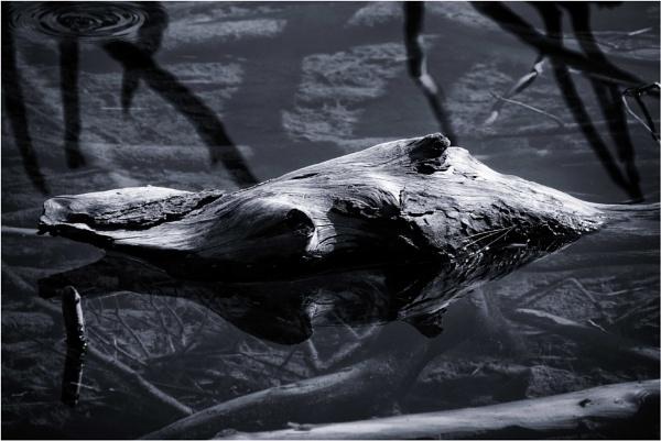 Leviathan by KingBee