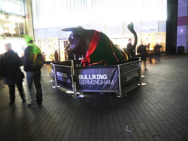 Festive Bull by happysnapperman