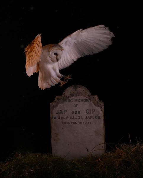 Night  owl by john thompson