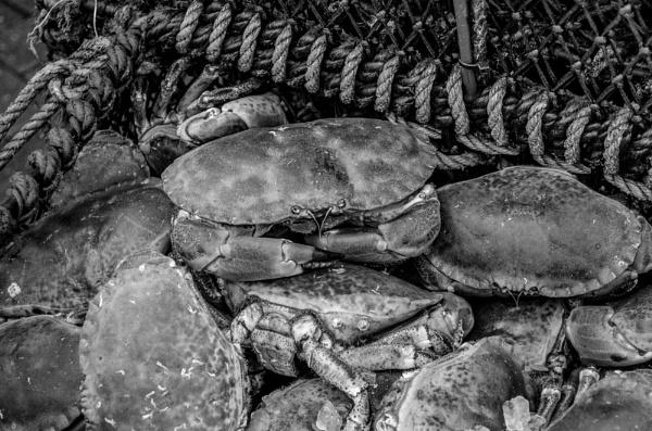 Crabs by Craigie10