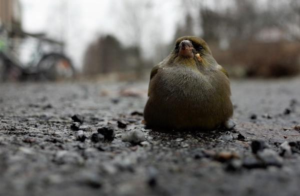BIRD AND BICYGLE by maratsuikka