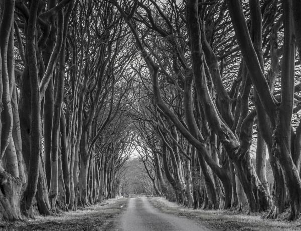 Avenue of Trees by Mark_Callander