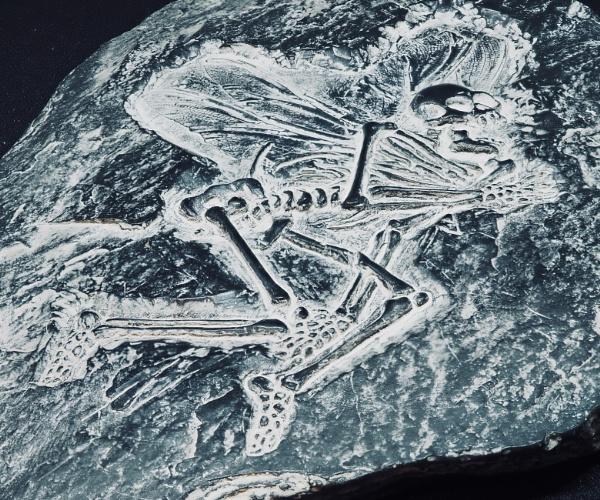 Fossilised Fairy by nclark