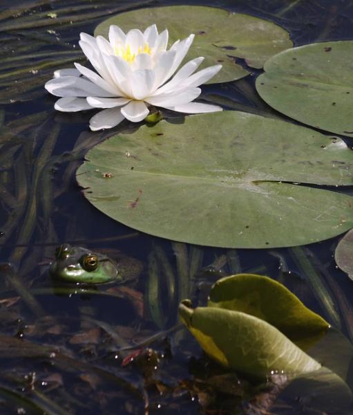 Pond Life by gconant