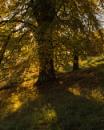 Autumn Sunshine by CliffGreen