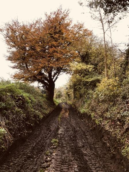 Muddy lane by caj26
