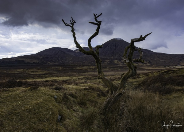 Twisted Tree... by Scottishlandscapes