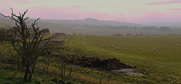 Sheep at dusk grazing on the Wiltshire ridgeway. by brandish
