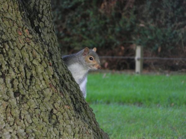Glastonbury Squirrel