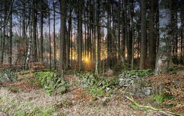 Sunlit trees by BillRookery