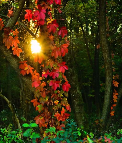 Hello Sunshine by KristiiHD