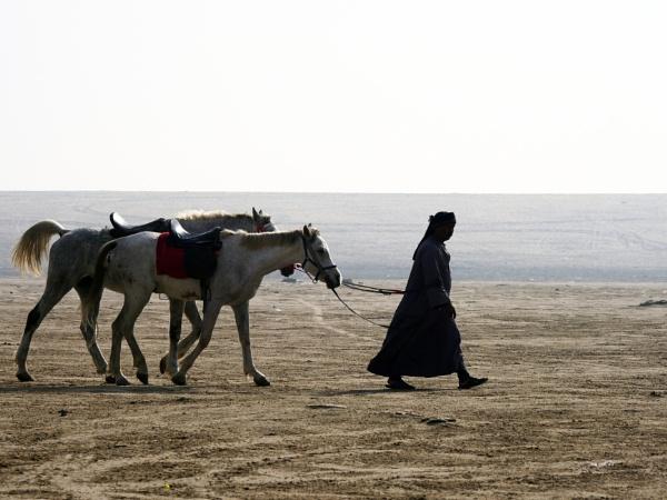 Arabian Horses by Savvas511
