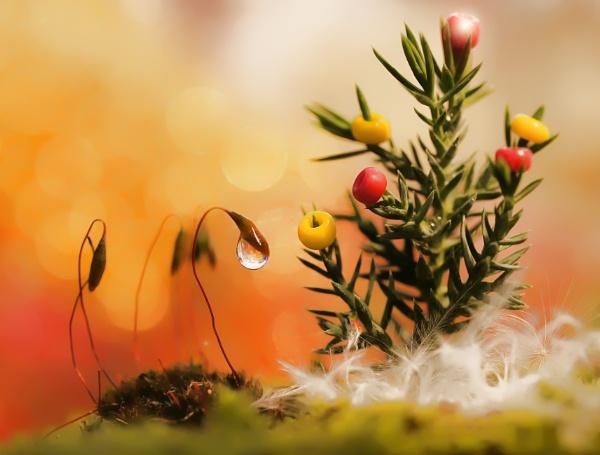 The Tree by littleflea