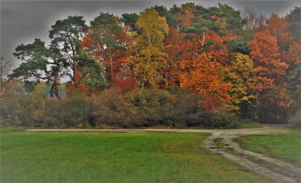 Autumnal Gleam Series #42 by PentaxBro
