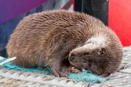 Photo : Toft Otter 4