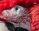 parrots face by madbob