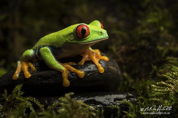 Forest Light by Miles Herbert