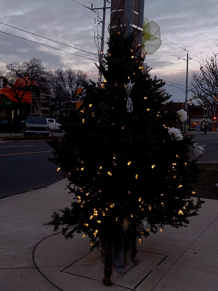 CHRISTMAS TREE in WESTDALE by TimothyDMorton