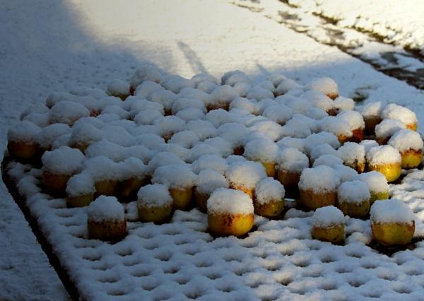Iced apples by helenlinda