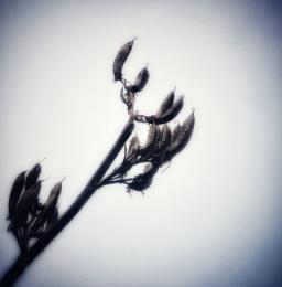 Seedy