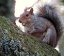 Nuts by SUE118
