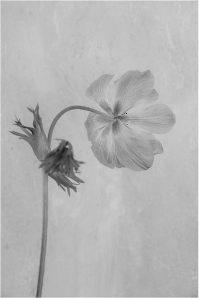 Monemone by rambler