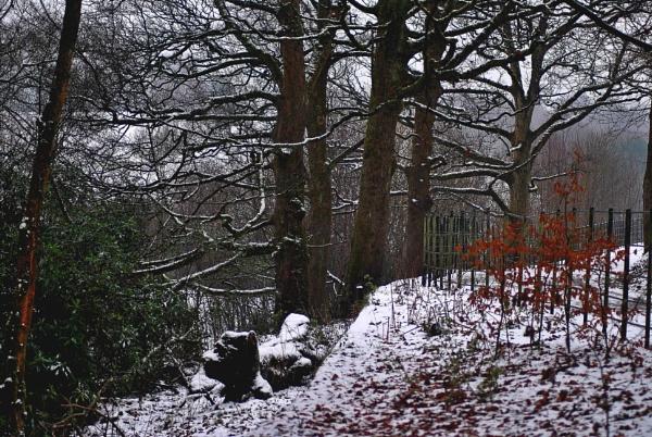 Seasons  greetings by oldham