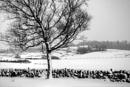 Winters Past by Irishkate