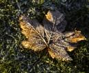 Frost & Sun by Irishkate