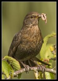 The Early Bird...