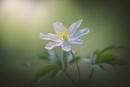 Simply Spring by jackyp