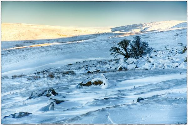 Snow by daibev