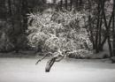 Winter tree by mommablue