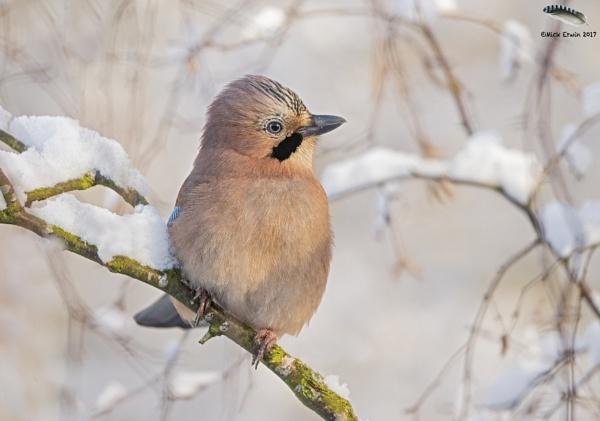 Jay winter wonderland