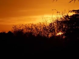 tonights golden sunset
