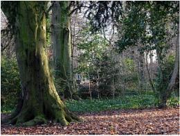 Astley Woods
